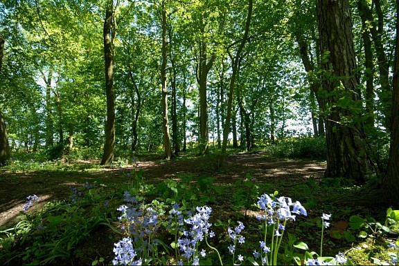 Woldgate Woods, East Yorkshire