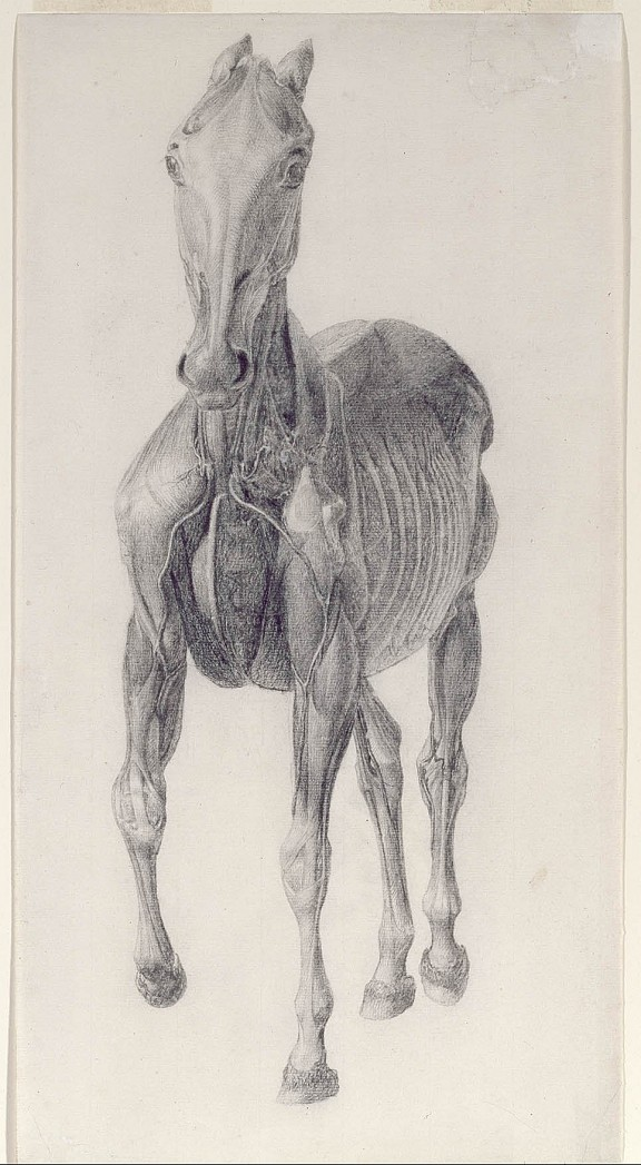 George Stubbs, studie. c.1756-1758. Royal Academy of Arts, London